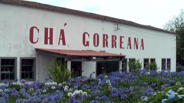 Gorreana, Sao Miguel, čaj továrna