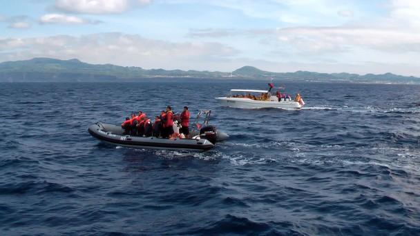 Ponta Delgtada, Sao Miguel, pozorování delfínů a velryb
